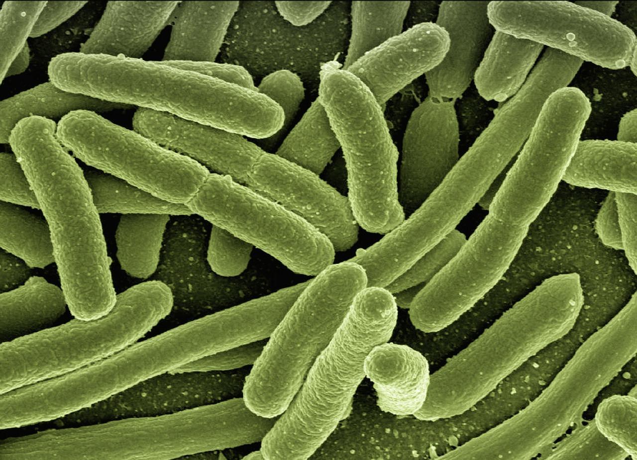 El uso de la ozonoterapia para la eliminación de bacterias en las ulceras