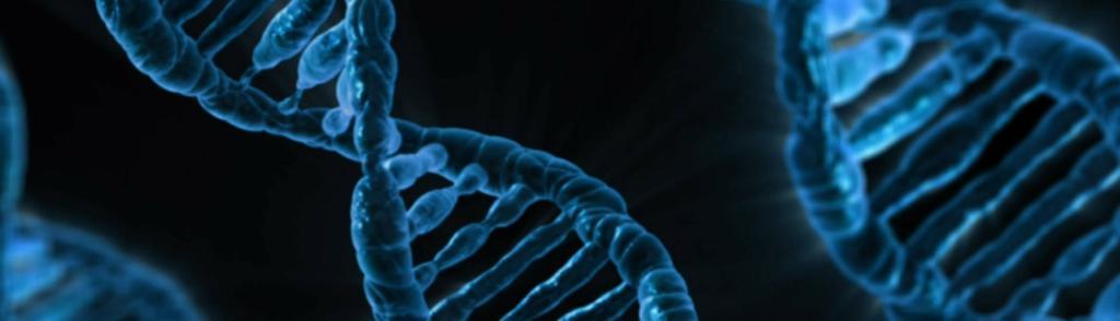 Terapias de medicina integrativa con herramientas de última generación
